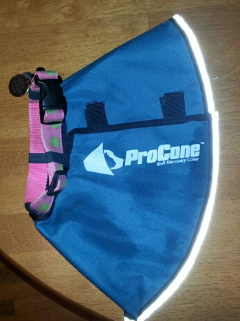 Surgery Collar - My Review of the Contech Pro Collar (5/6)