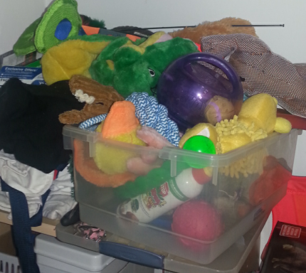Do you think she has enough toys? She is spoiled rotten