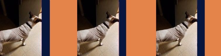 bandage-header